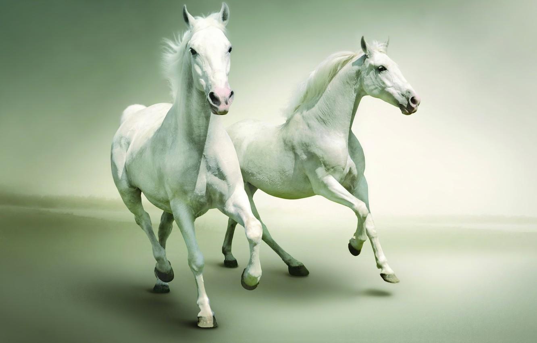 Фото обои ultapanorama, pastel colors, white horses
