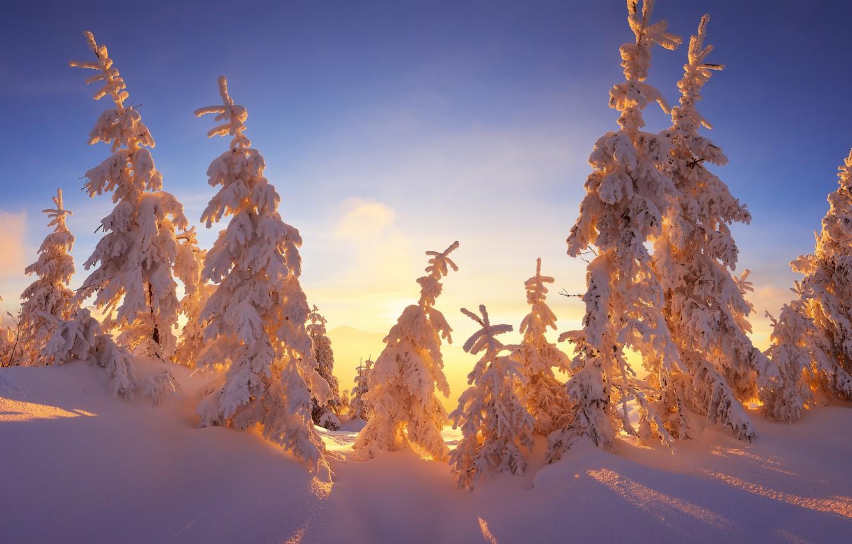 Фото обои зима, небо, лучи, свет, снег, ветки, голубое, красота, сказка, ели, мороз, сугробы, тени, солнечно, ёлки, …