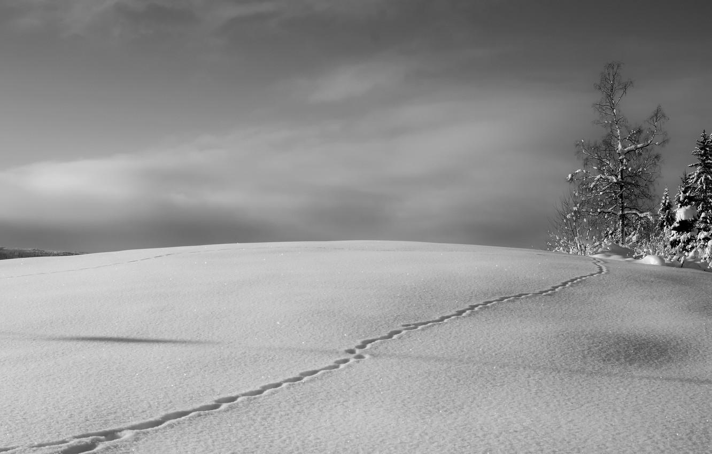 Фото обои зима, снег, дерево, след