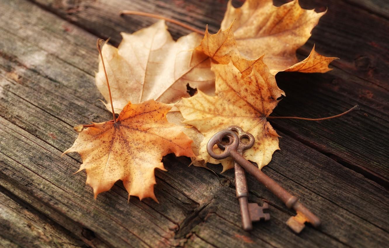 Фото обои осень, листья, доски, клён, ключи