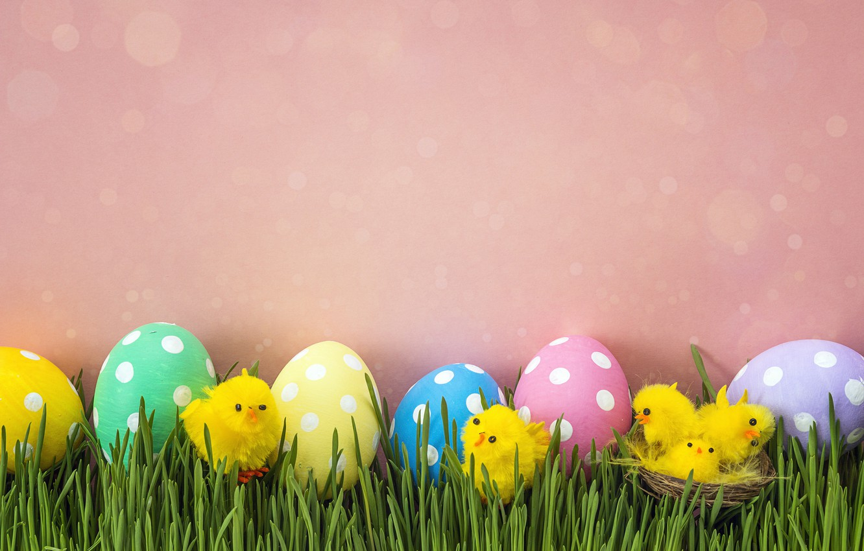 Фото обои трава, цыплята, весна, Пасха, pink, spring, Easter, eggs, decoration, Happy, яйца крашеные