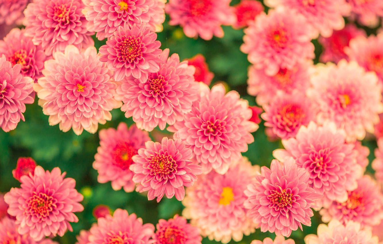 Фото обои flower, blossom, beautiful, garden, petal, bloom, floral