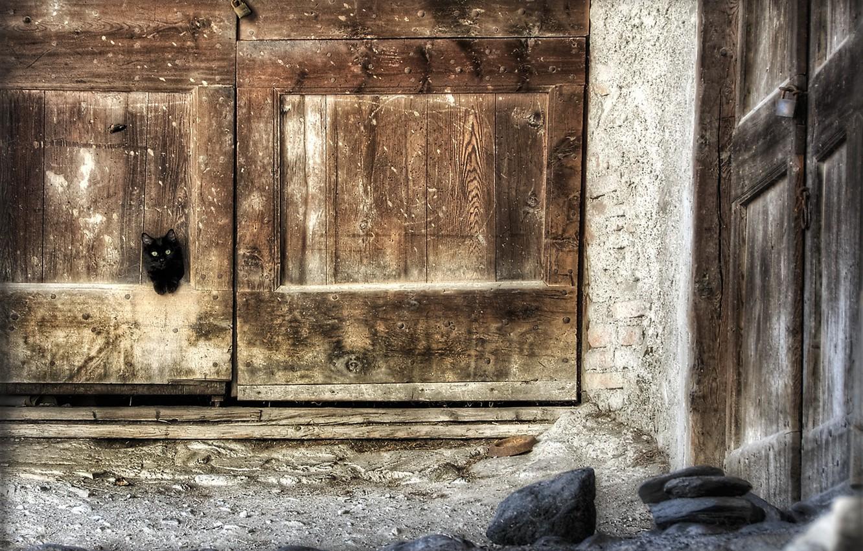 Фото обои кошка, дом, дверь