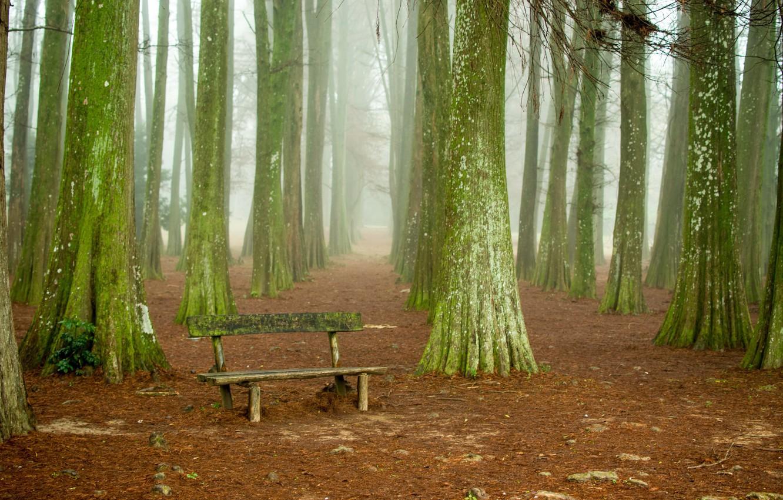 Фото обои деревья, природа, скамья