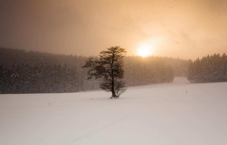 Фото обои зима, поле, снег, закат, дерево, метель