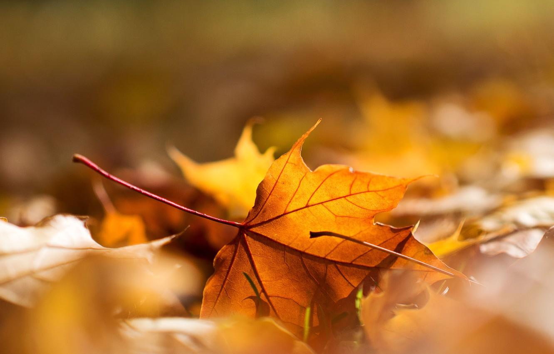 Фото обои осень, макро, лист, листва