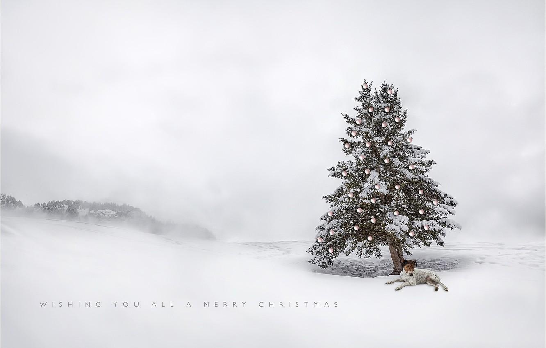 Фото обои дерево, игрушки, собака, праздиник, рождественская елка