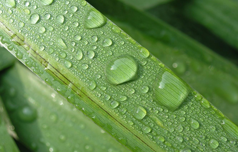 Фото обои цветок, макро, природа, лист, дождь, капля