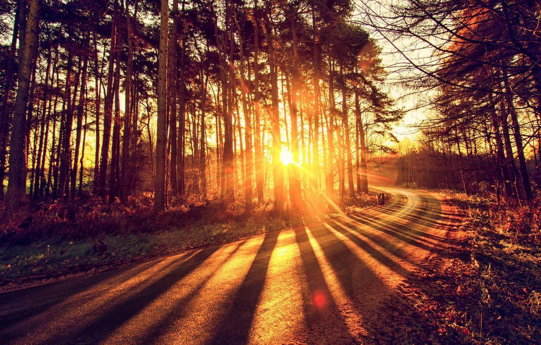 Фото обои дорога, осень, лес, свет
