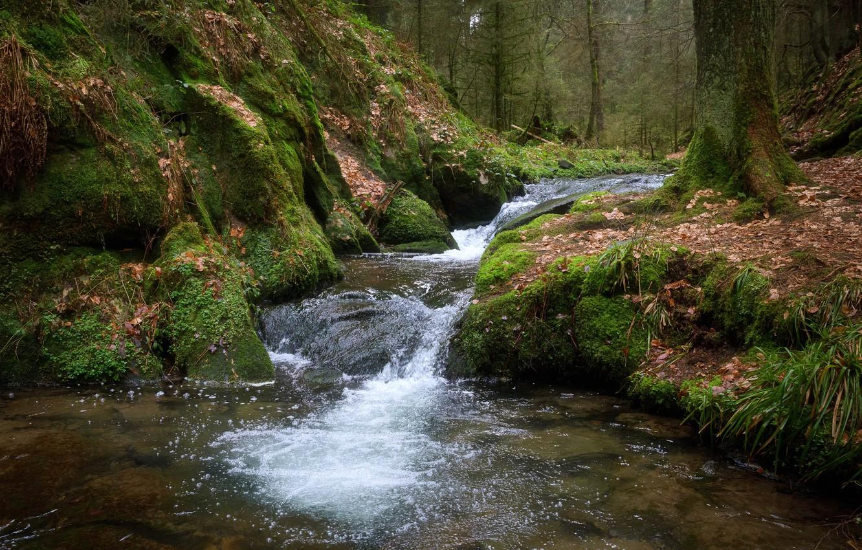 фон, фото лесных ручьев отправляете фотографии
