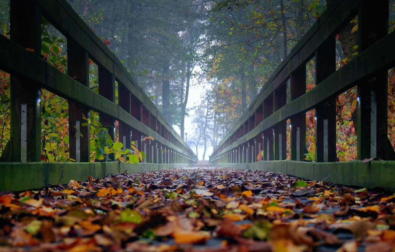 Фото обои осень, листья, деревья, туман, мостик, ultra hd, осень в лесу, мостик в лесу