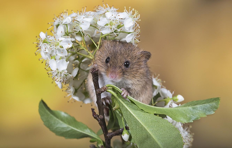 Мышка и цветы картинки