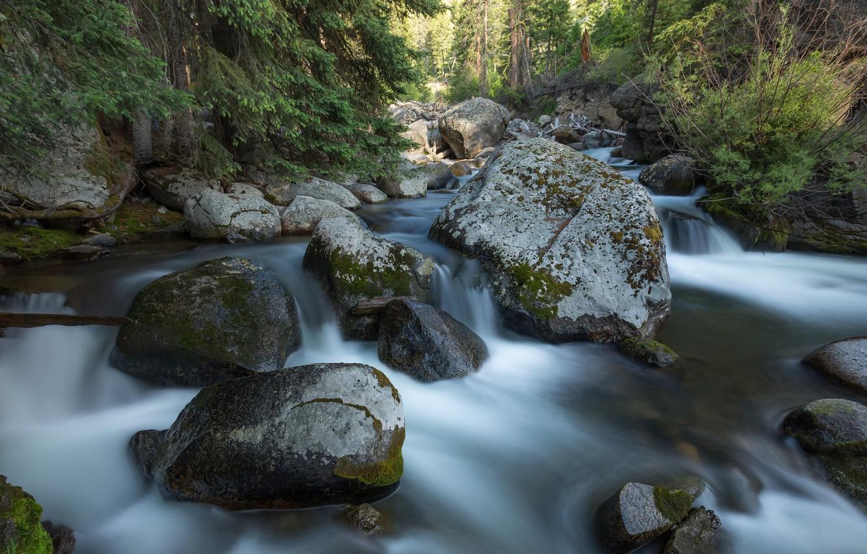Фото обои лес, камни, США, речка, Yellowstone National Park
