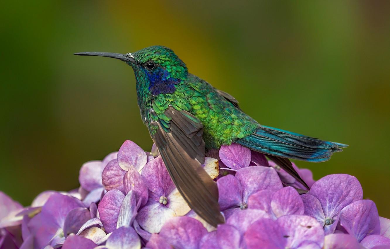 фото колибри крупным планом думаете
