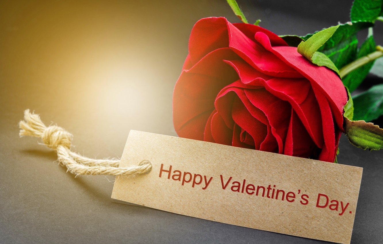 Фото обои red, love, rose, romantic, gift, valentine`s day