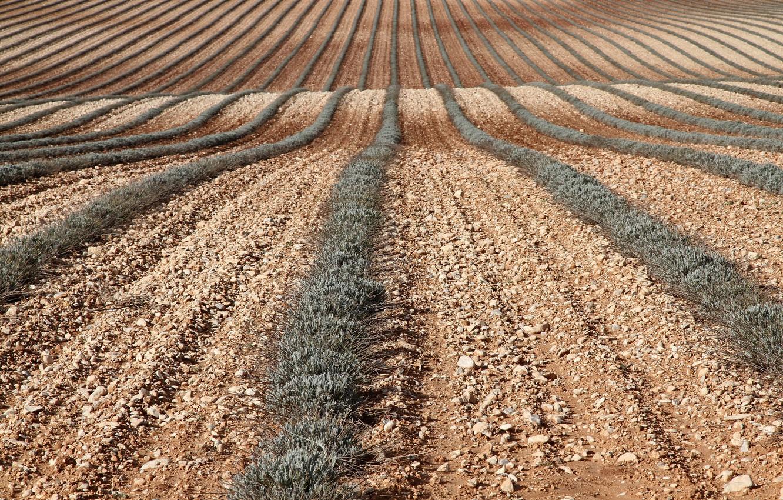 Фото обои поле, природа, фон, земля