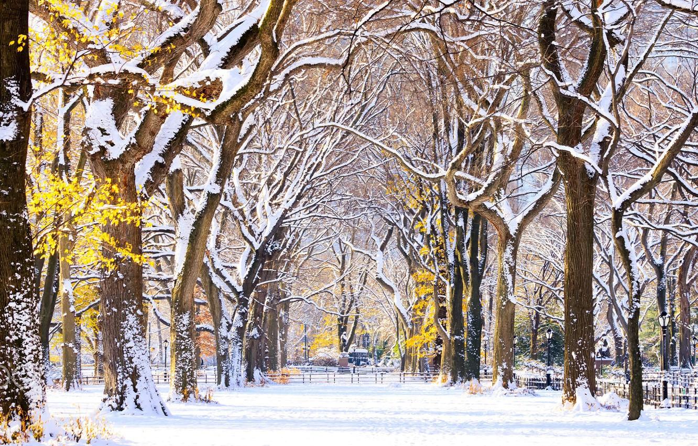 Фото обои аллея, New York, usa, Central Park, первый снег
