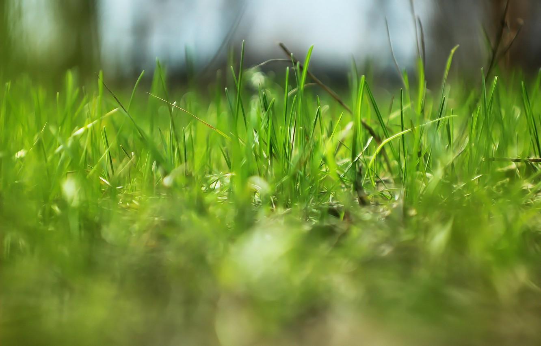 Фото обои природа, весна, травка