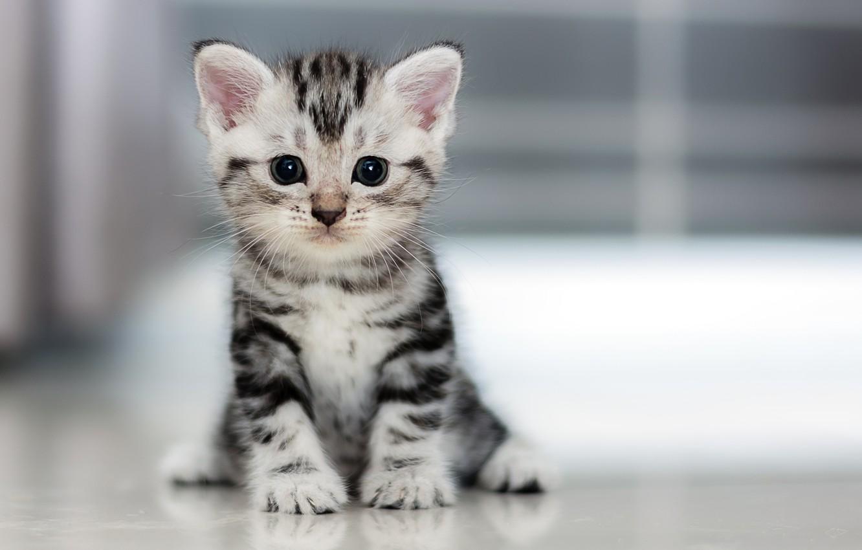 Фото обои котенок, маленький, пушистик
