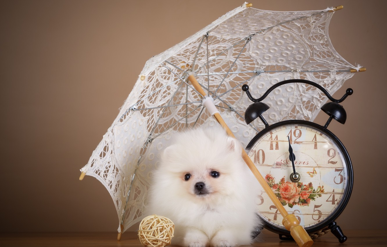 Фото обои часы, зонт, щенок