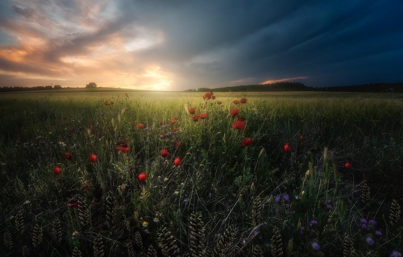 Фото обои цветы, луг, травы