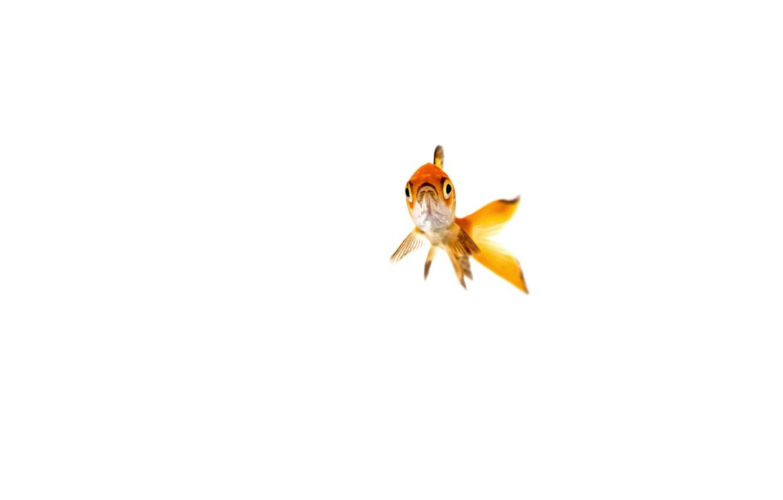 Фото обои природа, фон, рыбка