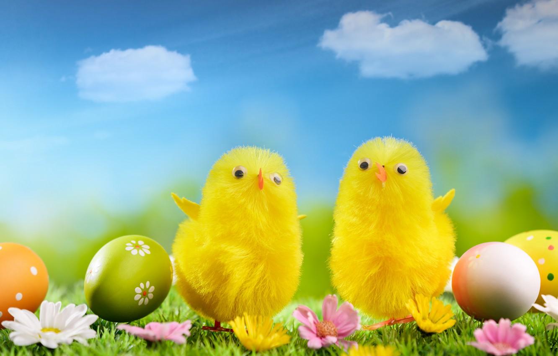 Картинка с пасхой цыпленок