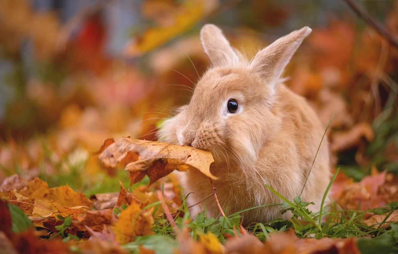 отца животные и осень в картинках для торговому центру
