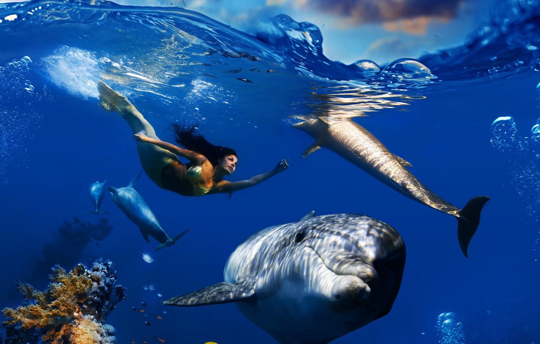 картинки с дельфинами под водой сорок лет отмечают