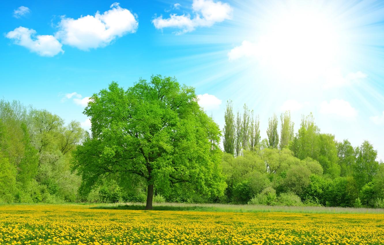 Фото обои зелень, лето, небо, солнце, облака, лучи, деревья, цветы, поляна, желтые, одуванчики