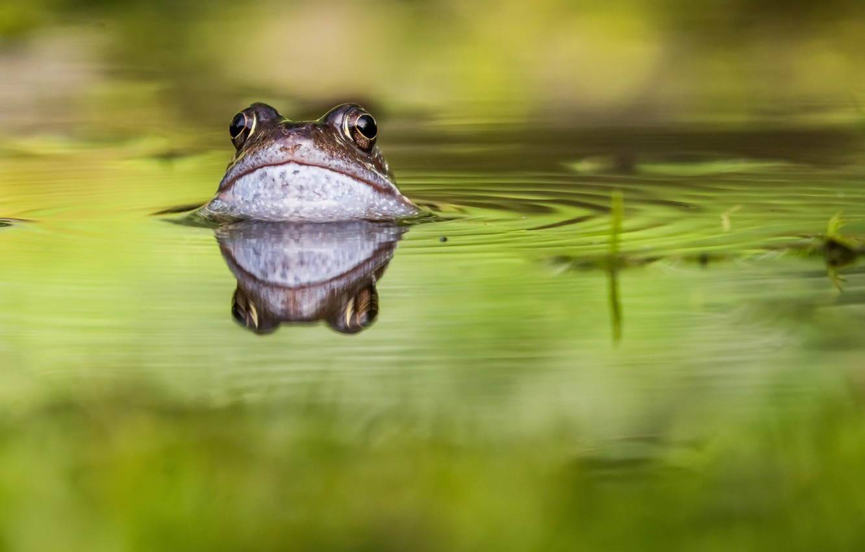 Картинки лягушки на пруду