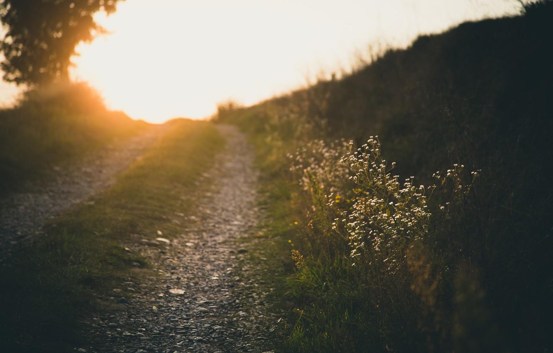 Фото обои дорога, лето, свет, цветы, природа