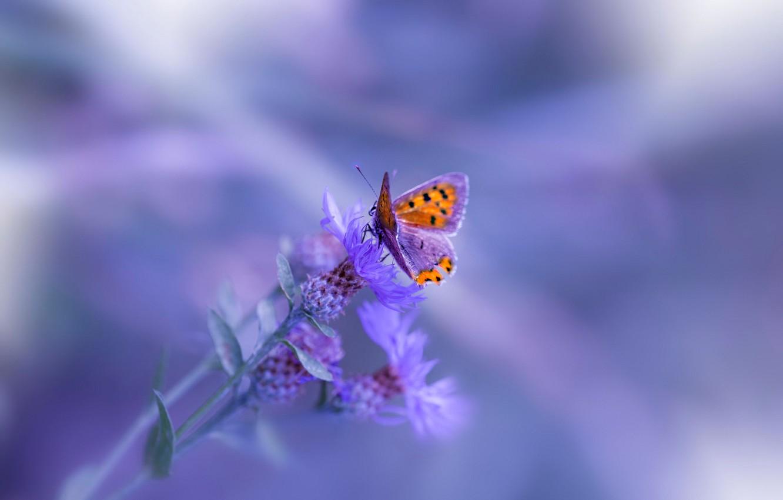 Фото обои макро, фон, бабочка, растение