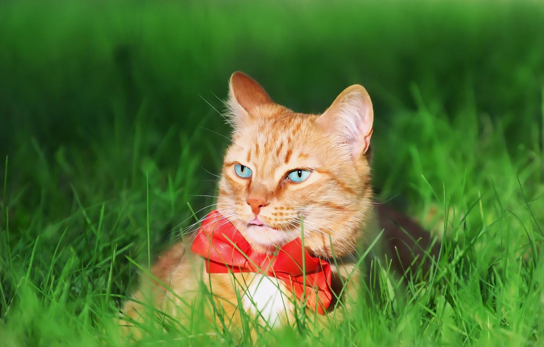 Фото обои зелень, кот, травка, галстук бабочка