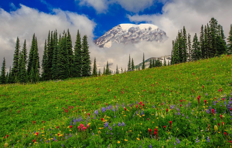 Фото обои облака, деревья, цветы, горы, луг, США, штат Вашингтон