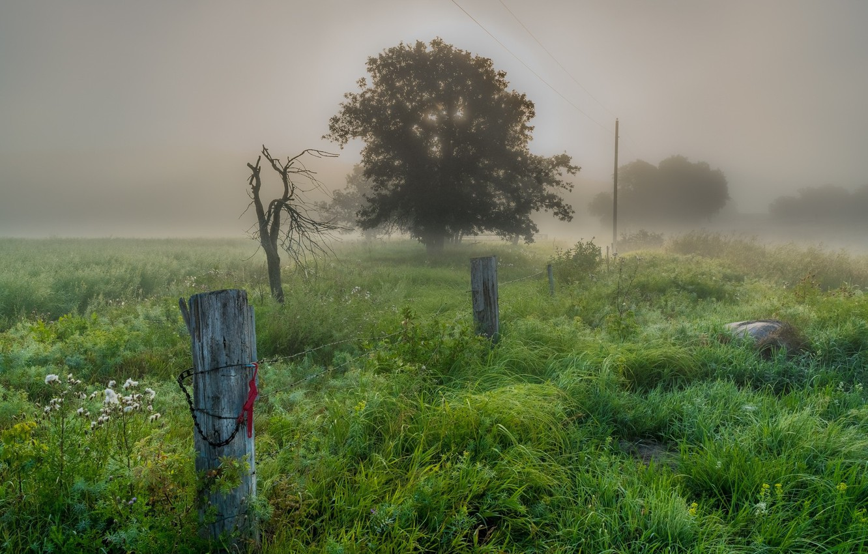 Фото обои пейзаж, природа, туман, красота