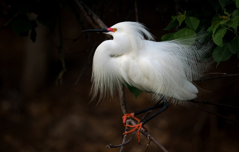 Фото красивый белая птица