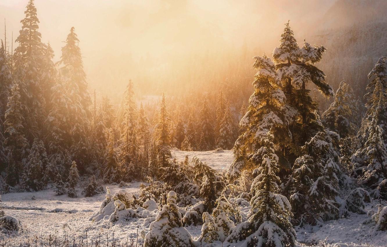Фото обои зима, лес, свет, снег, природа