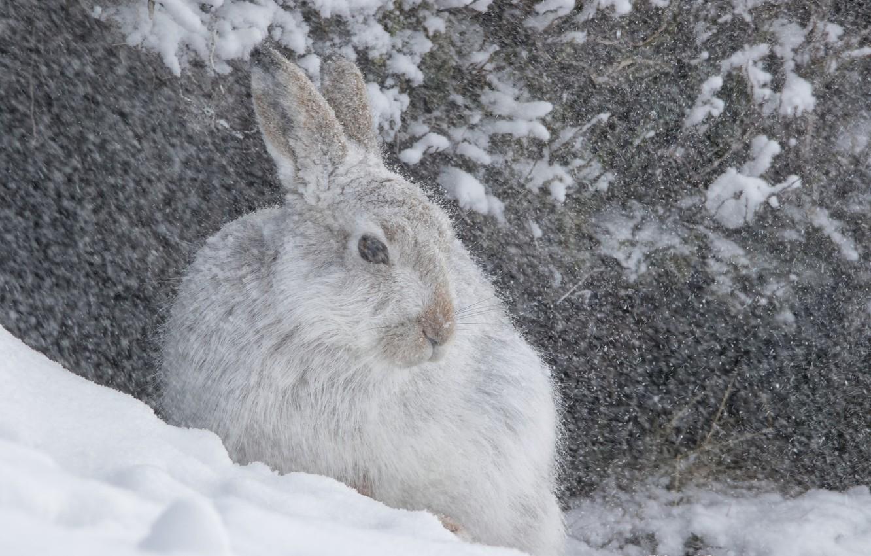 испечь ровные фото заяц зайчата зимой его считают