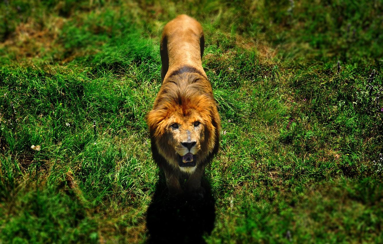 Скачать картинки животные и природа