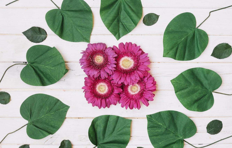 Фото обои листья, фон, Цветы, герберы