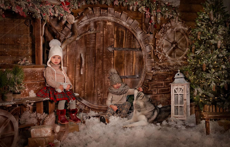 Фото обои дети, животное, праздник, новый год, собака