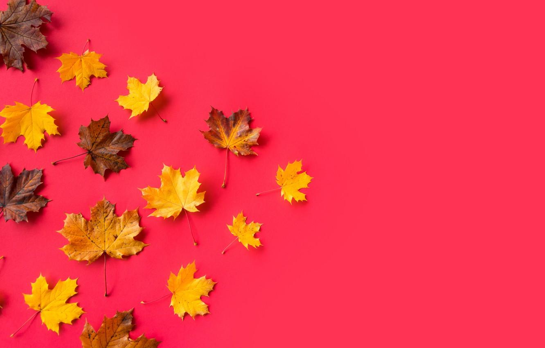 Фото обои листья, желтые, клен