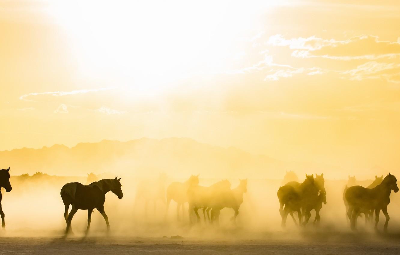 Фото обои туман, кони, утро
