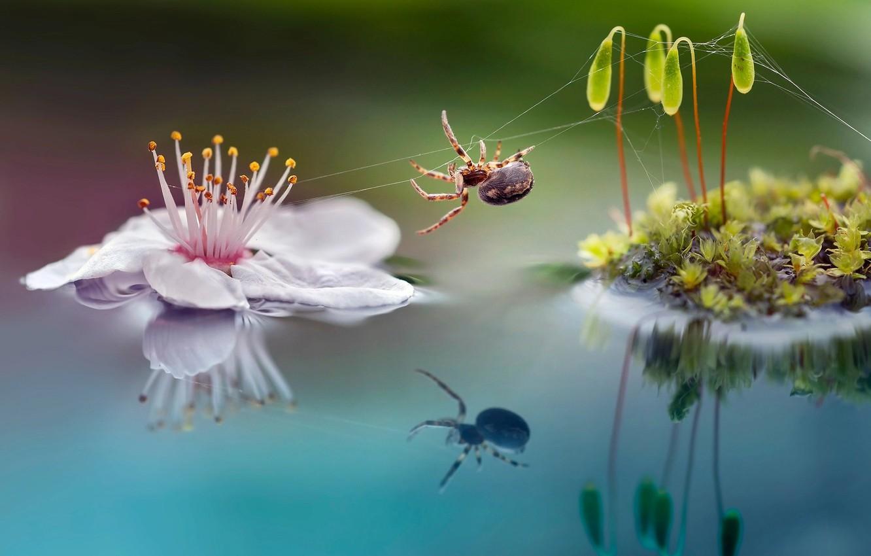 Фото обои цветок, макро, природа, ростки, мох, паучок, Roberto Aldrovandi