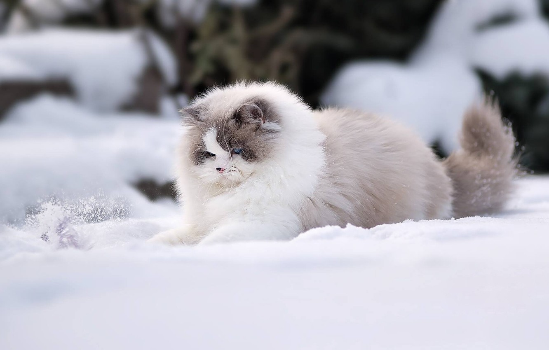 Фото кота зимой на рабочий стол