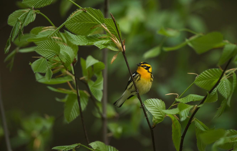 Обои Птичка, семена. Животные foto 19