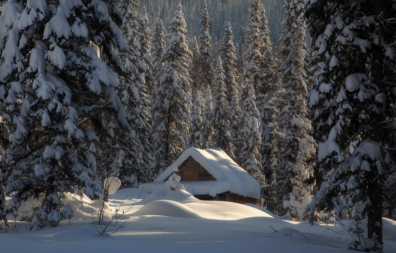 Фото обои зима, лес, снег, избушка, ели, сугробы, хижина, Россия