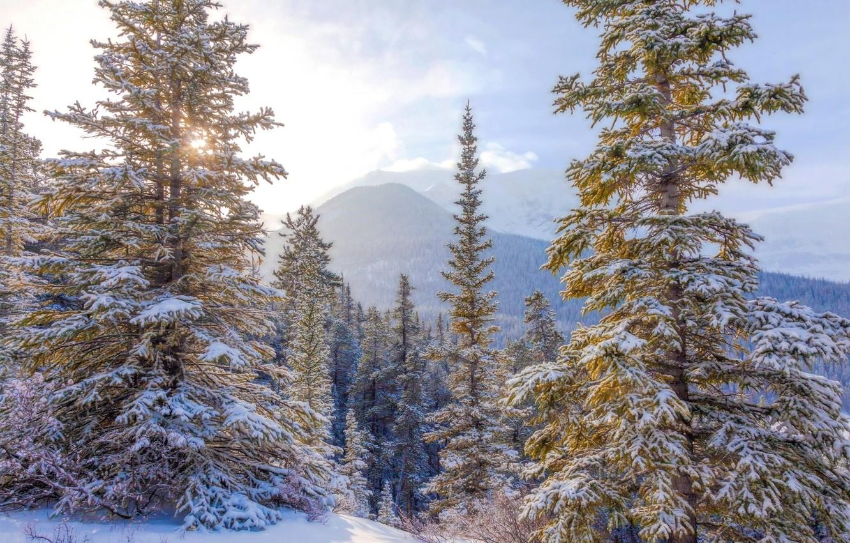 Фото обои зима, небо, снег, ёлки