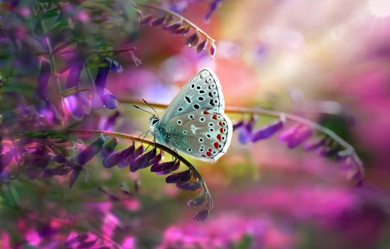 Фото обои листья, макро, природа, стебли, бабочка, цветки, Mustafa Öztürk